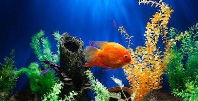 Mejores filtros de agua para acuario 4
